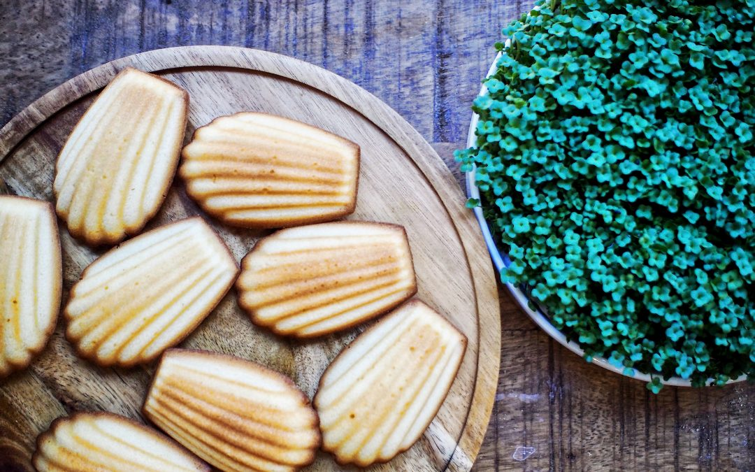 The Madeleine |  Snack Time